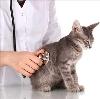 Ветеринарные клиники в Карачаевске